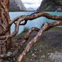 Laguna Orconcocha, P.N. Huascaran