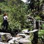 Wanderung durchs Valle de Cocora