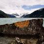 Laguna Leones mit Gletscher