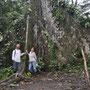 200 Jahre alter Baum