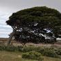 Patagonischer Wind...