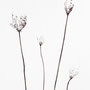 Bianco carta - acquarello su carta - cm 56 x 76 - 2013