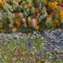 Herbstfarben am Rand des Sees