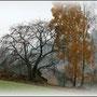 Nebelbäume (Foto: Hans G. Lauth)