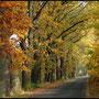Mammersreuther Allee im Herbst (Foto: Hans G. Lauth)
