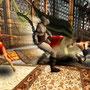 prince of persia jeu vidéo image
