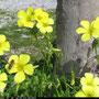 Frühling in Cirella