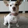 ... Nadine findet es gut und Erna.. ach, diese Ohren können doch ALLES tragen!
