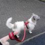 ... Sophia und Leihhund Maxi