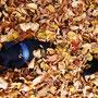 nen kleinen Herbsthund :)