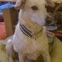 für Schnapshund Palinka