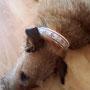 ... nunja, jedenfalls engelsgleich, wenn sie schläft. So muss das aber auch, als waschechter Irish Terrier!