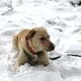 Titus tarnt sich im Schnee. Doof nur, dass rot so veradmmt auffällig ist!