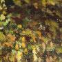 Marrones, verdes, amarillos y multicolores. Foto de Silverio Sánchez Corredera, 2014.