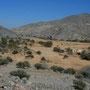 as sayh plateau auf 1100m