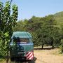 zwischen orangebäumen in olimpos, türkei