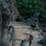 extrem steile treppen, die einige touristen an die grenzen bringen