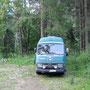 am waldrand bei trzic, slowenien