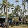 39_im palmenhain nähe morjim