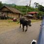immer wieder müssen wir büffeln ausweichen. errinnerungen an indien kommen auf