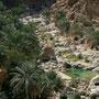 unterwegs im wadi. dattelpalmen ist für die bewohner eine wichtige nahrungsquelle