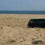 7_ostküste, im feld bei al saqlaah