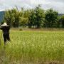 laotische vogelscheuche