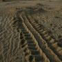die ausbeute der sucherei nach schildkröten, ausser spuren im sand gibts nichts.