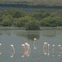 flamingos überwintern ausserhalb dubai's