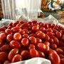 tomaten-zuwischen-verpflegung