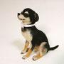 No.153 トイプードル・ミックス犬(ウェルカムドール)