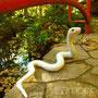 No.099 白蛇