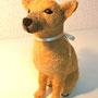 No.066 ミックス犬