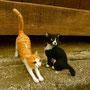 縞猫&黒猫