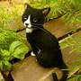 No.120 黒猫
