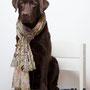 """Model-Hund"" 5.3.2015"