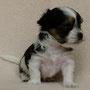 Bimyou 5 Wochen alt, 434 g