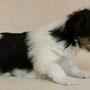 4 Wochen alt,,510 g