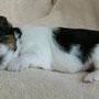 Byakko 3 Wochen alt, 431 g