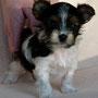 Chiyoko 6 Wochen alt, 723 g.