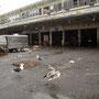 seagulls New York Fishmarket 2003