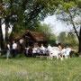Kleinod - Wochenendhaus im Lauteracher Ried 2012