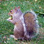 squirrel im Washington Park 2009