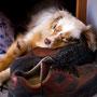 13.03.2012 - Das Bettchen allein reicht machmal nicht - Die Schuhe von Herrchen sind so komfortable!