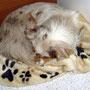 02.09.2011 - Camping - Nach dem Morgen-Spaziergang. Wir sind wach, Foxi schläft.