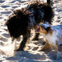 Mit einem Tibet-Terrier - Lass mich endlich in Ruhe!!!!