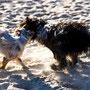 Mit einem Tibet-Terrier