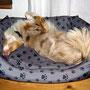 20.11.2011 - wieder eine neue Schlaf-Position!