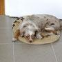 16.06.2011 - In der Küche - Foxi ist 6 Monate alt!!!