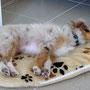 02.04.2011 - Foxi 15 Wochen